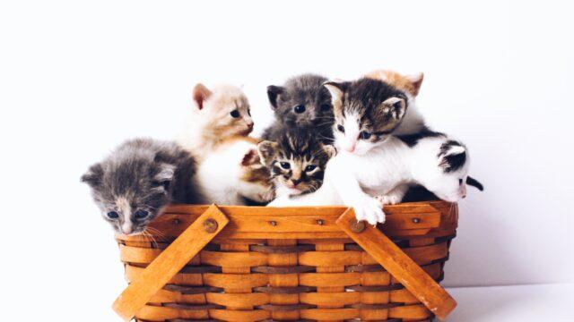 青山めぐはパチンコと猫が好き?インスタ画像で好きなものを検証!