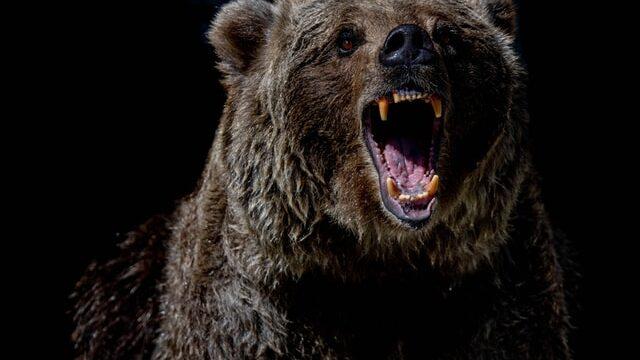 札幌にクマと出現した全裸男は誰?SNSや顔画像は?マスクに全裸の目的も調査